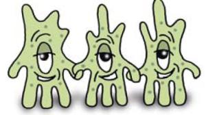 Fibroblasten